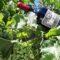 Cantine Europa Sibiliana: il meglio della Sicilia in bottiglia
